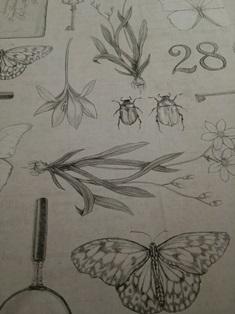 昆虫 植物 壁紙.JPG